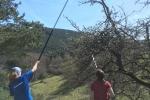 Pflege der Obstbäume