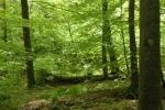 Wald-Impressionen