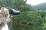 Loki Pfälzerwald